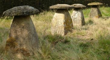 Een groep van 4 Ham- steen staddle stones